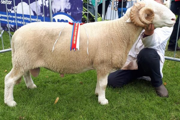 'Cherry Tree Commander' breed champion RTCS 2018
