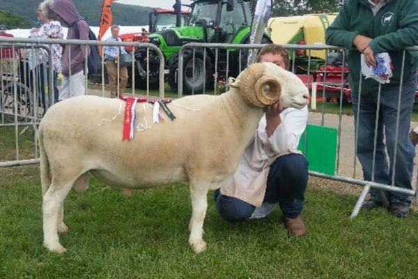 'Wharfedale Titan' breed champion & reserve interbreed hill champion RTCS 2016