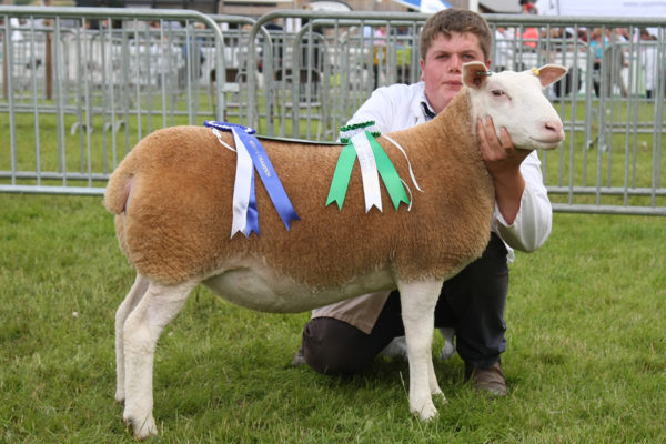 'Windrush Out Of This World' female champion & reserve breed champion RWS 2015